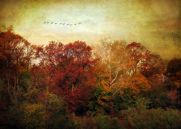 Nature Photograph - Treetops by Jessica Jenney