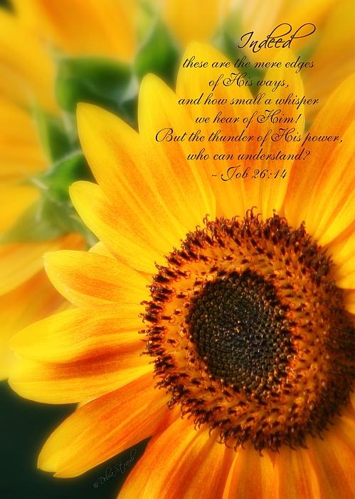 Sunflowers Photograph - A Small Whisper by Debra Straub