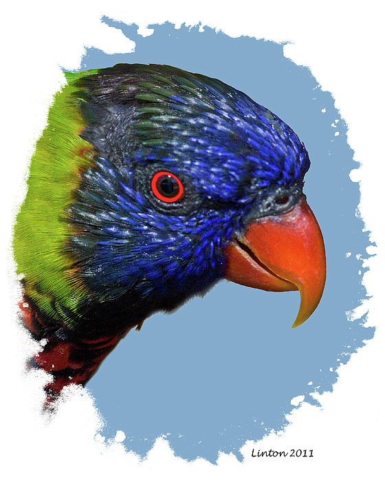 Lorikeet Photograph - Australian Lorikeet by Larry Linton