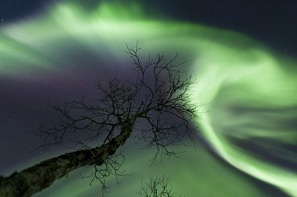 Green Photograph - Northern Lights In The Arctic by Arild Heitmann