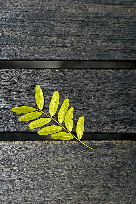 Leaf Photograph - Untitled by Luke Pinneo
