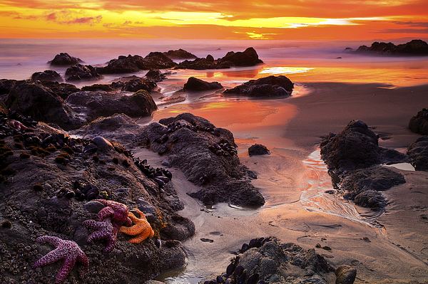 Beaches Photograph - 5 Star Sunset by Greg Clure