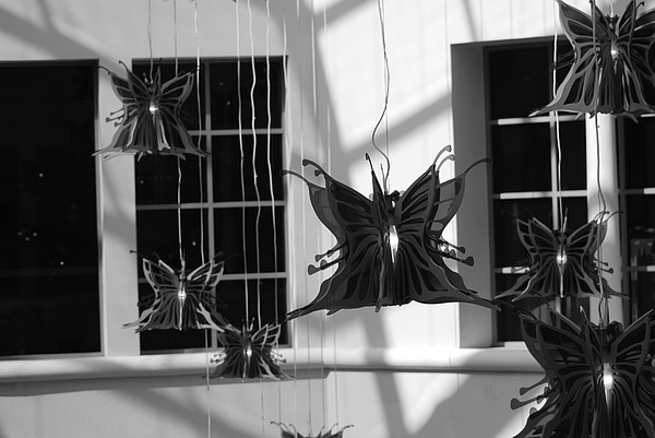 Black And White Photograph - Hanging Butterflies by Rob Hans