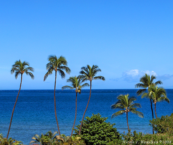 Palm Trees Photograph - 7 Palms by Nicole I Hamilton