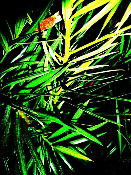 Leaves Photograph by Jacqueline Doulis