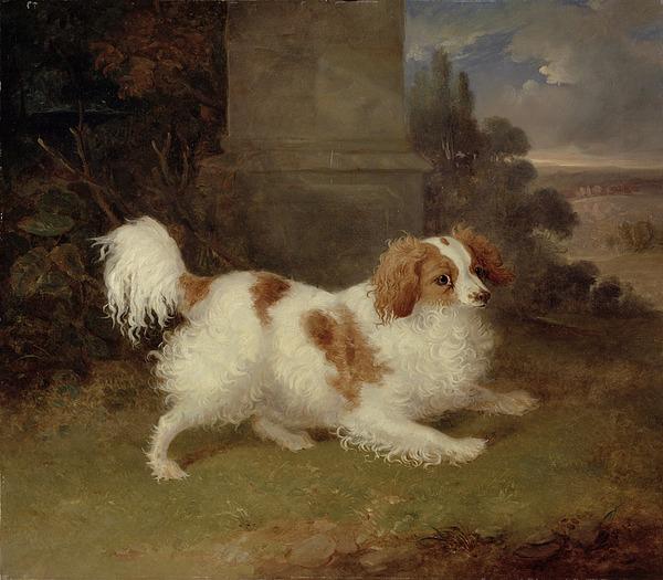 Blenheim Painting - A Blenheim Spaniel by William Webb