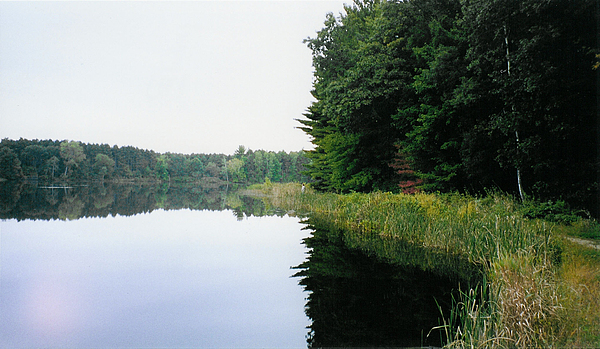 Forest Photograph - A Clear Day by Tom Hefko