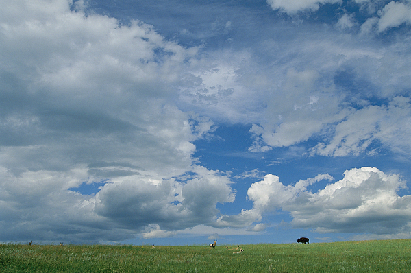 North America Photograph - A Cloud-filled Sky Over Pronghorns by Annie Griffiths