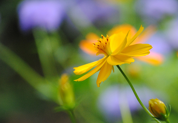 Flower Photograph - A Delicate Touch Of Orange by William Martin