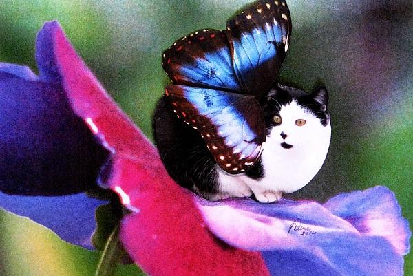Fairy Cats Photograph - A Feline Fairy In My Garden by Angela Davies
