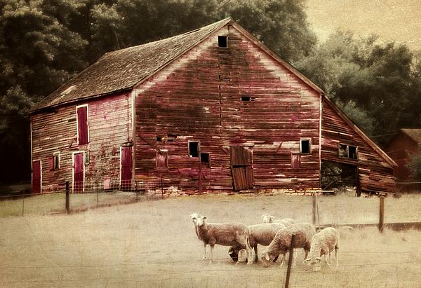 Barn Photograph - A Grazy Day by Julie Hamilton