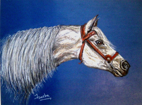 Animal Drawing Drawing - A Horse With No Name by Fareeha Khawaja