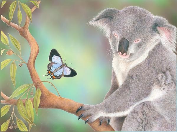 Koala Drawing - A Kiss For Koala by Karen Hull