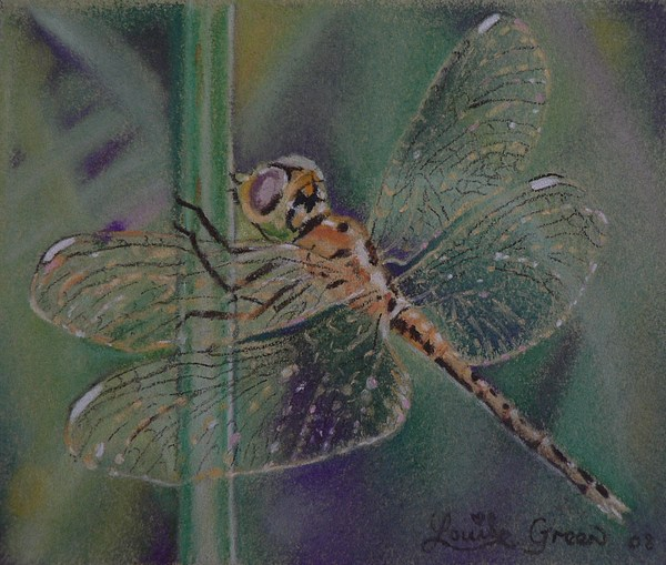 Insect Pastel - A Little Dragonfly Magic by Louise Green