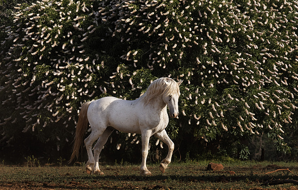 Outdoors Photograph - A Mustang Stallion In The Wild Horse by Melissa Farlow