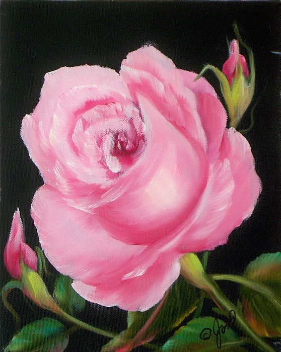 Floral Painting - A Pink Rose by Joni McPherson