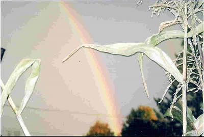 A Rainbow Photograph by Carla Vigneau