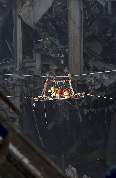 Debris Photograph - A Rescue Dog Is Transported by Stocktrek Images