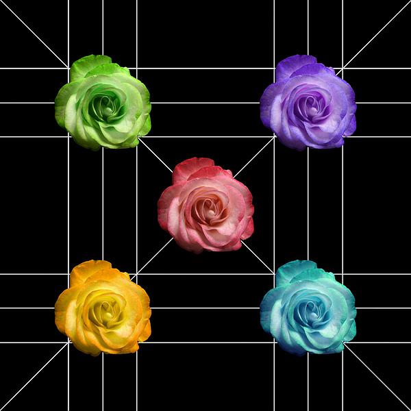 A Rose Is A Rose Photograph - A Rose Is A Rose Is A Rose by Peter Piatt