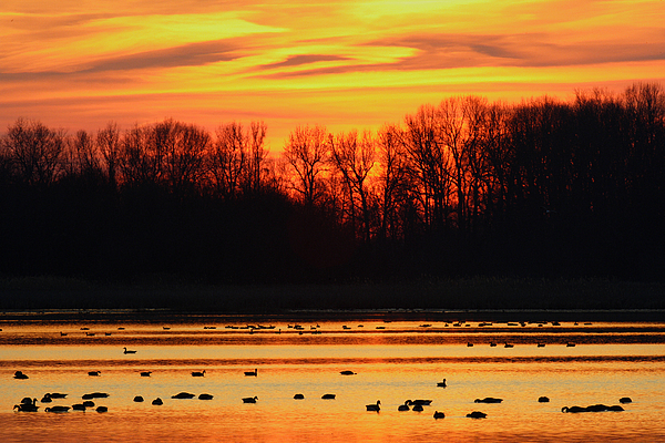Sunset Photograph - A Scene At Bombay Hook National by George Grall