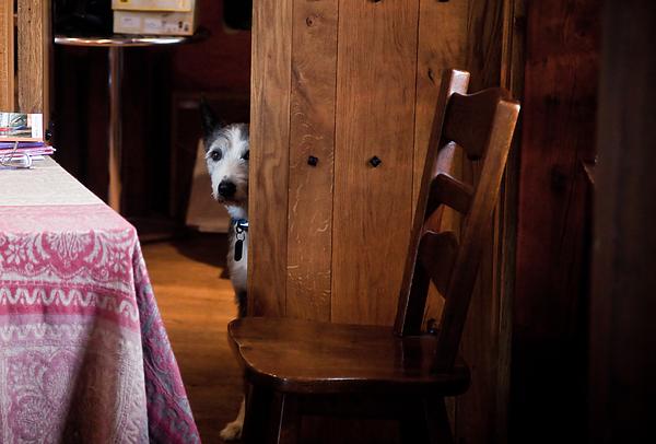 Ireland Photograph - A Shy Guardian by Patrick  Flynn