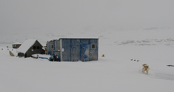 Arctic Photograph - A Sledge Dog House Two by Sidsel Genee