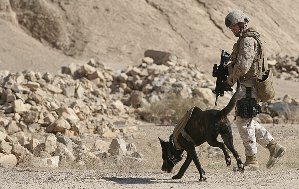Dogs Photograph - A Soldier And His Dog Search An Area by Stocktrek Images