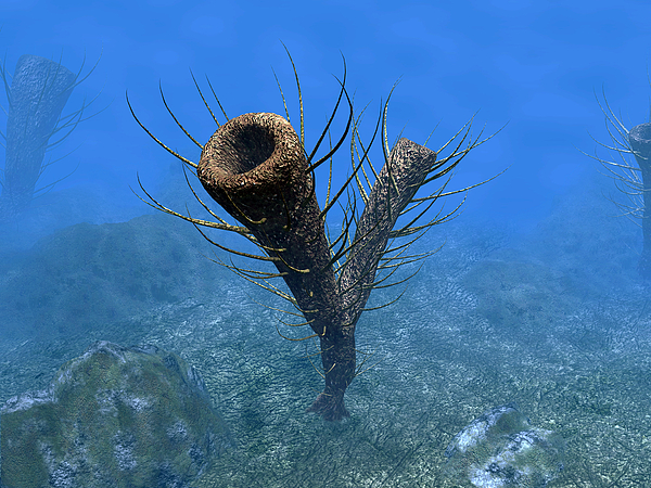 Natural History Digital Art - A Species Of Pirania, A Primitive by Walter Myers