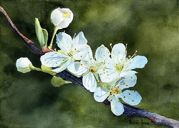 Watercolor Painting - A Touch Of Innocence by Bobbi Price
