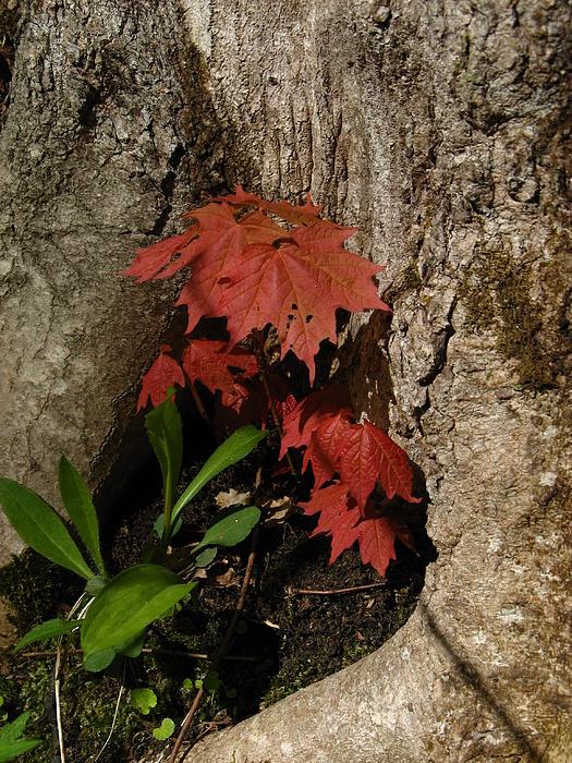Tree Photograph - A Tree Hug by Donica Abbinett