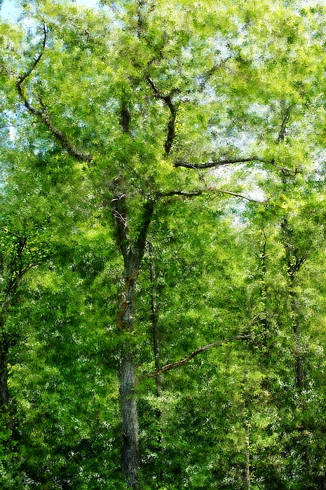 Digital Photo Photograph - A Tree In The Woods At The Hacienda  by David Lane