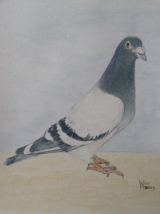 A Winning Bird Painting by Alan Webb