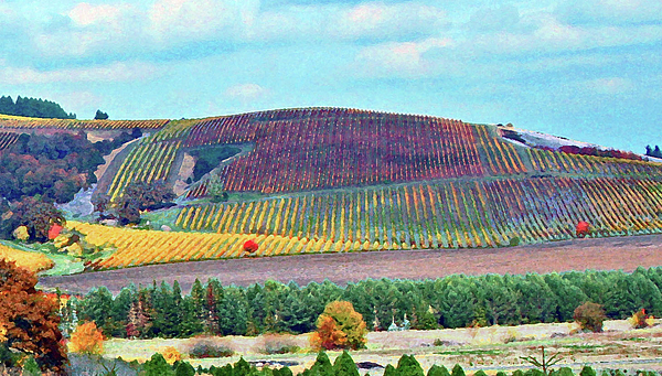 Vineyards Photograph - A Yamhill Co. Vineyard by Margaret Hood