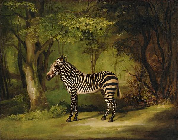 Zebra Painting - A Zebra by George Stubbs