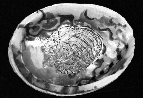 Mary Deal Photograph - Abalone Shell by Mary Deal