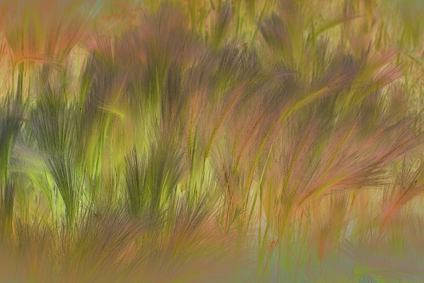 Grass Photograph - Abstract Grasses by Ron Hoggard