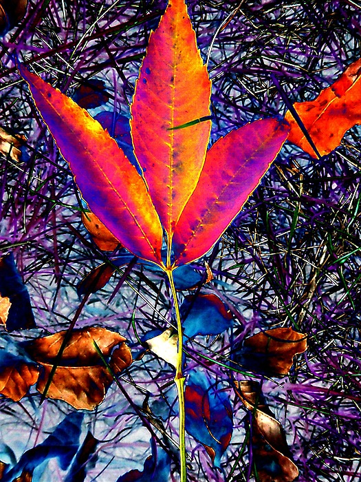 Orange Photograph - Abstracted Fall Leaves by Beth Akerman