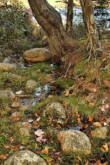 Landscape Photograph - Acadia Fall Foliage by Alexander Mendoza