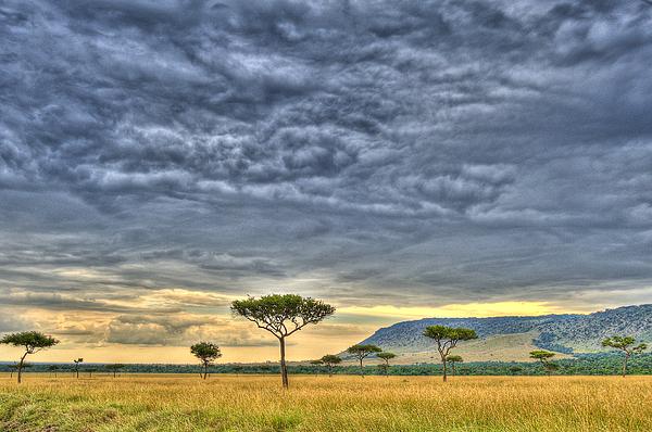 Africa Photograph - African Savanna by Babur Yakar