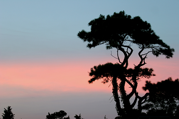 Tranquility Photograph - African Sunset by Kate  Leikin