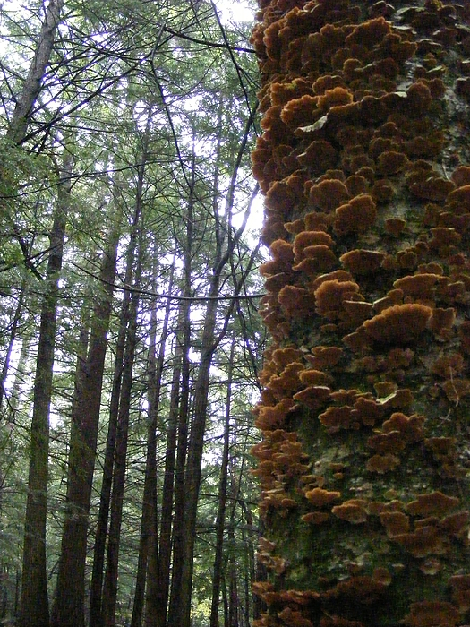Fungus Photograph - After The Rain by Alison Heckard
