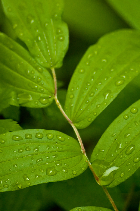Closeup Photograph - After The Rainfall by R J Ruppenthal