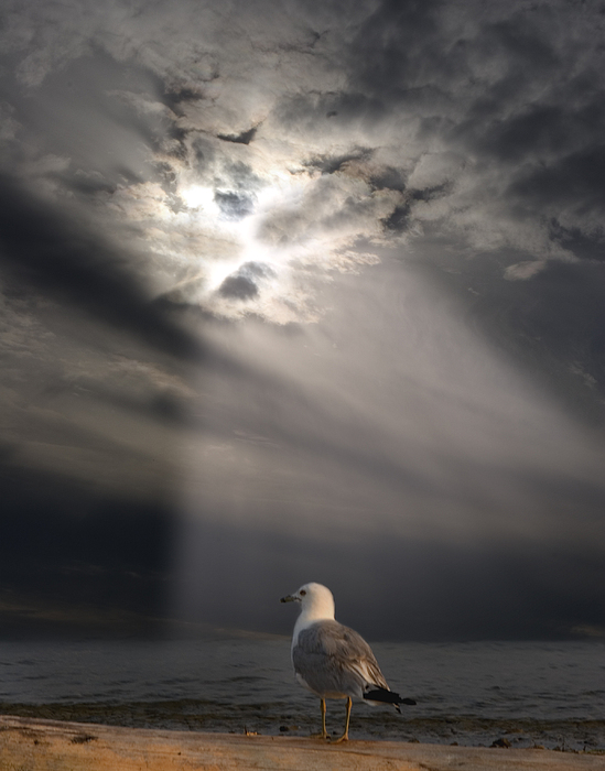 Bird Photograph - After The Storm by Elizabeth Reynders