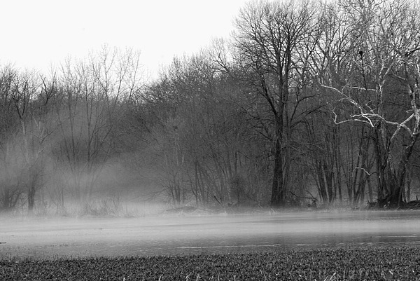 Fog Photograph - Afternoon Fog Rising by Michelle Hastings
