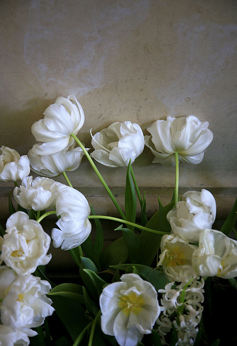Flowers Photograph - Against The Wall by David Watkins Jr