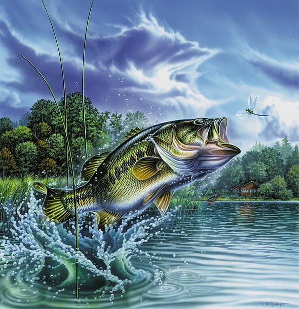 Largemouth Bass Painting - Airborne Bass by Jon Q Wright
