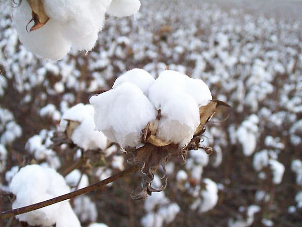 Alabama Photograph - Alabama Cotton Bowl by Paula Ferguson