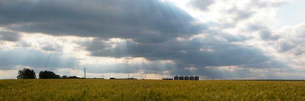 Wheat Photograph - Alberta Wheat Field by Stuart Turnbull