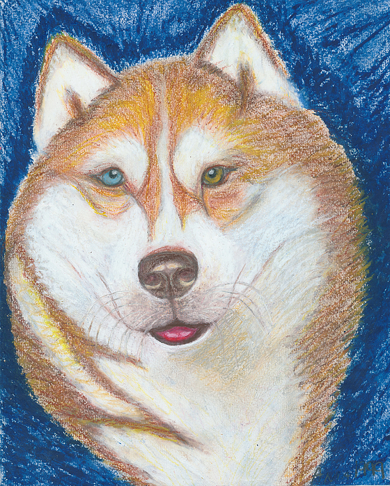 Drawing Drawing - Alek The Siberian Husky by Ania M Milo