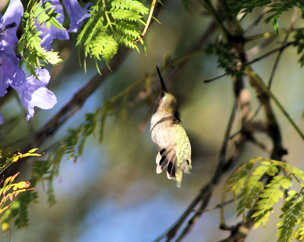Hummingbird Photograph - All The Way Up There by Ellen Lerner ODonnell